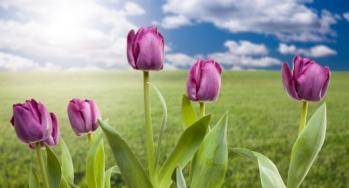 פרחי באך לטיפול בחרדות, התבגרות ותסכולים