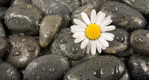 טיפול במצבים נפשיים באמצעות פרחי באך
