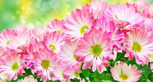 איזון הצ'אקרה השלישית - מקלעת השמש בעזרת פרחי באך