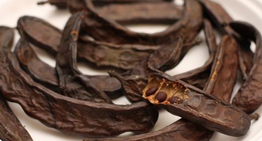 חרובים (ceratonia siliqua)