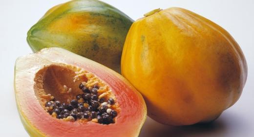פאפאיה (Carica papaya)