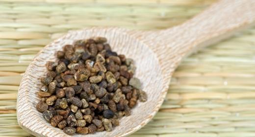 הל/ קרדמון (elettaria cardamomum)