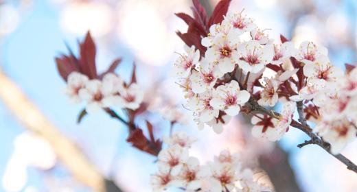 שירת האביב