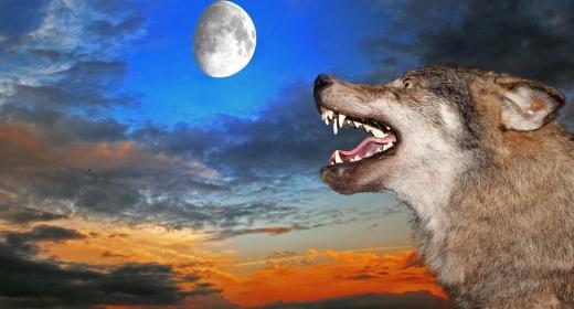 מי מפחד מהזאב הרע?