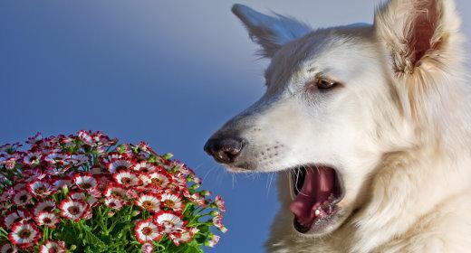 טיפול באלרגיות בבעלי חיים
