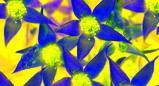 פרחי באך והמודעות העצמית שלנו