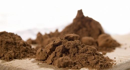 קקאו מצוי (Teobroma cacao)