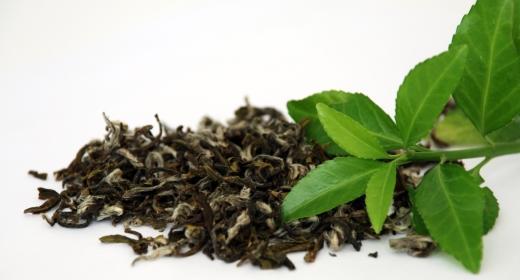 תה ירוק (camellia sinensis)