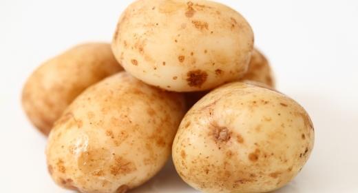 תפוח אדמה (solanum tuberosum)