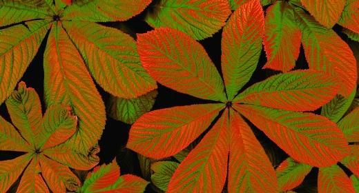 הכרות עם עולם צמחי המרפא