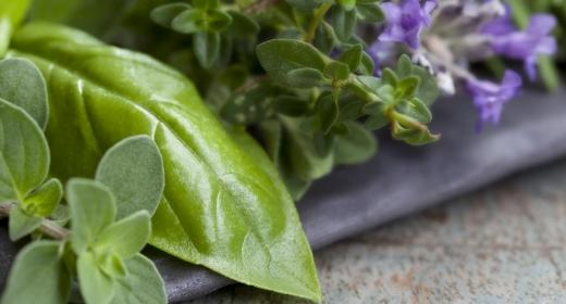צמחי מרפא סיניים לטיפול בפוריות האישה – פרק ג'