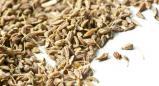 אניס (pimpinella anisum)