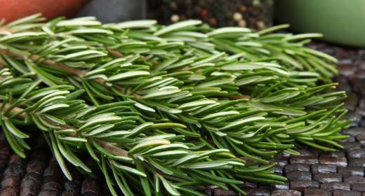 רוזמרין רפואי (Rosmarinus officinalis)