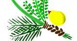 ארבעת המינים ותרומתם למניעה וטיפול במחלות כרוניות